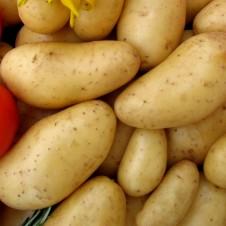 """Pomme de terre """"Annabelle"""" x60 - Calibre 25/32"""