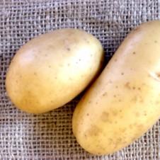 "Pomme de terre ""Bea"" x60 - Calibre 28/40"