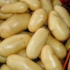 """Pomme de terre """"Belle de Fontenay"""" x100 - Calibre 25/32"""