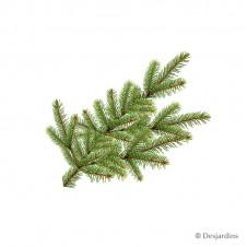 """Branche naturelle """"Abies Nordmann"""""""